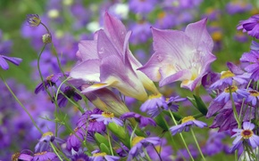 Picture flowers, nature, plants, bells, field