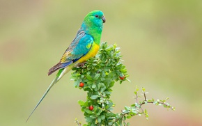 Picture bright, branch, parrot