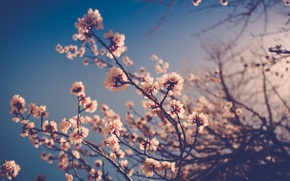 Picture flowers, branches, stems, buds, bokeh