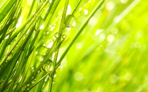 Picture grass, drops, macro, nature, Rosa, morning, nature, macro, morning, the grass, the dew drops