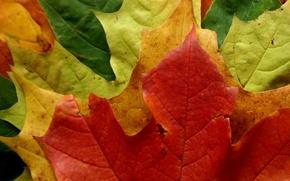 Picture forest, leaves, color, Park, foliage, leaf, falling leaves, macro autumn, leaves macro autumn style