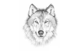 Picture face, wolf, painting, light background, wolf