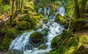 Picture greens, forest, stream, stones, waterfall, moss