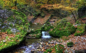 Picture autumn, forest, stream, stones, moss