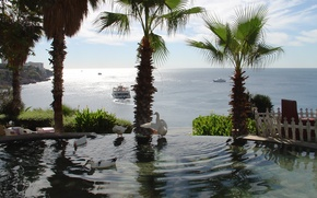 Picture sea, duck, Antalya
