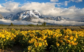 Picture clouds, flowers, mountains, meadow, Wyoming, Wyoming, Grand Teton, Grand Teton National Park, Rocky mountains, Mount …