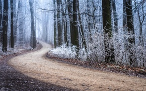 Picture frost, road, autumn, forest, trees