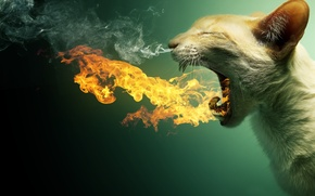 Wallpaper cat, cat, fire, teeth, mouth, burning, smoke. couples