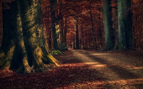 Wallpaper leaves, forest, autumn, trees, nature