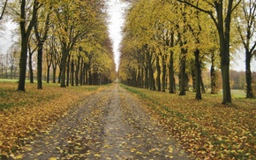 Picture Autumn, Trees, Leaves, Park, Fall, Foliage, Track, Park, Autumn, Falling leaves, Leaves, Path, The ranks