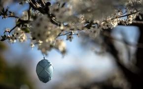 Picture spring, garden, egg