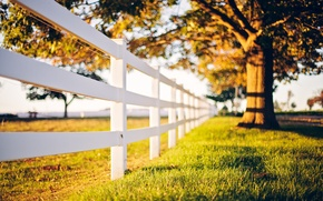 Picture grass, light, the fence