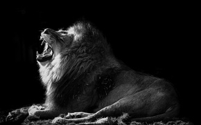 Picture nature, Leo, beast