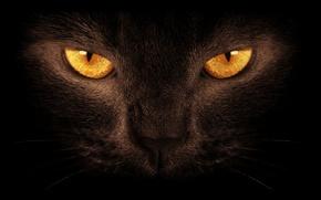 Picture eyes, cat, black, the dark background