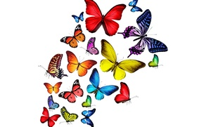 Picture butterfly, colorful, colorful, bright, butterflies, rainbow