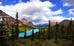 Picture forest, the sky, clouds, mountains, lake, spruce