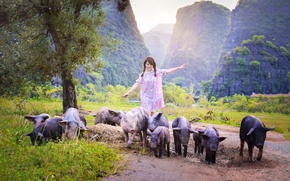Picture summer, girl, walk, Asian, pigs