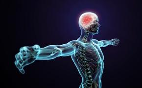 Picture body, pose, human, brain