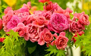 Picture leaves, roses, petals, buds