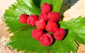 Picture sand, leaves, raspberry