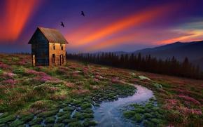 Wallpaper water, landscape, birds, nature, house, bumps