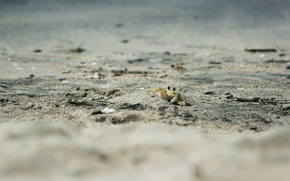 Wallpaper animals, crab, beach, sand