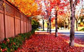 Wallpaper road, leaves, the sun, trees, landscape, flowers, nature, background, tree, the fence, beauty, spring, falling ...