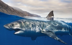 Picture water, shark, nature