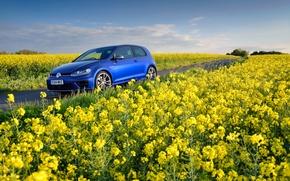 Picture field, flowers, blue, Volkswagen, blue, yellow, Volkswagen, Golf R, Mk7