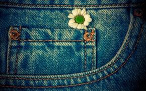 Wallpaper flower, macro, jeans