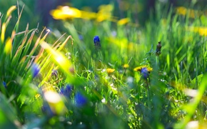 Picture summer, grass, rays, flowers, nature