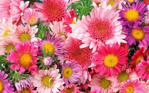 Picture flowers, beautiful, bright, flowers, a lot, colorful