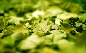Wallpaper nature, super macro high resolution, leaf macro photo