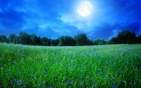 Picture field, landscape, sunset, flowers, nature, cornflowers
