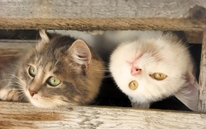Picture cat, kitty, kitten, kitty, cats, funny cat, funny cat