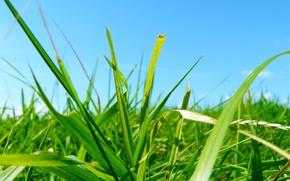 Wallpaper Grass, green, blue, leaves