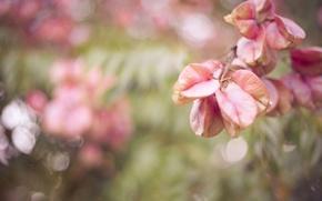 Picture macro, glare, foliage, branch
