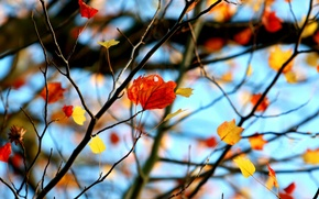 Picture leaves, macro, branches, red, background, tree, widescreen, Wallpaper, leaf, wallpaper, leaf, widescreen, background, leaves, macro, …
