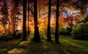Picture forest, trees, the rays of the sun, over