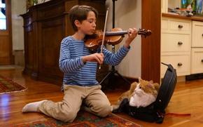 Picture cat, music, each, mood, violin, Malamute