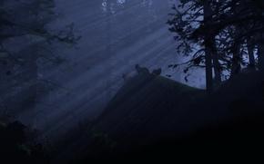 Wallpaper Forest, night, light, wolves