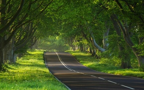 Picture road, trees, nature, the way, the way, tree, mood, mood, road, photos of nature