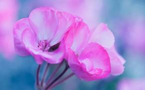 Wallpaper flowers, plant, petals, inflorescence