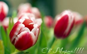 Wallpaper flowers, March 8, dear, uzdunrobit, day!, women, tulips, women's, all