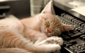 Wallpaper keyboard, sleep, background