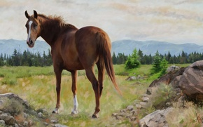 Picture landscape, nature, horse, horse, graphics, picture, painting, Wallpaper from lolita777