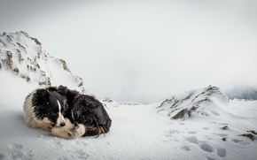 Picture cold, snow, loneliness, dog