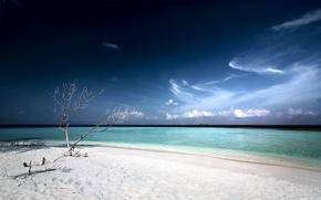 Wallpaper Laguna, beach, tree, white sand