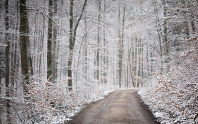 Picture road, autumn, forest, snow, nature