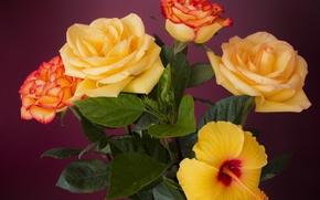 Wallpaper roses, bouquet, petals, buds, hibiscus